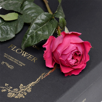 壁纸玫瑰女神手绘